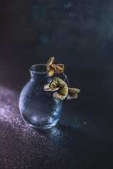Dried elegance (RoCafe) Tags: pentacon pentacon50mmf18 stilllife dried hydrangea vase autumn bokeh vintagelens m42 nikond600