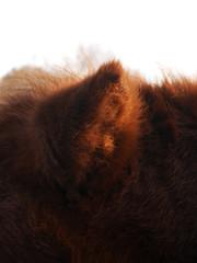 Das Ohr. / 21.11.2016 (ben.kaden) Tags: berlin tierparkberlin friedrichsfelde ohr pony 2016 21112016 herbst