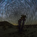 Star Trails and Cholla in the Anza-Borrego Desert