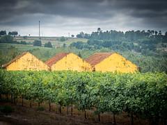 3 Scheunen (olipennell) Tags: portugal santar viseu pt casalsancho weinberg building scheune vineyard hut