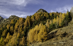 (robbar74) Tags: autunno autumn valledaosta colori colors natura nature