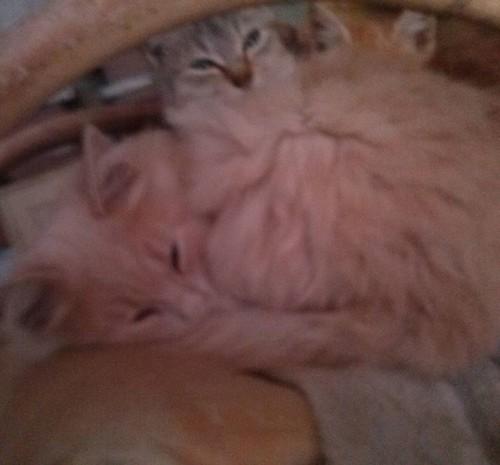 #cats #animalidomestici #home #Avezzano