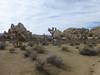 (ArgyleMJH) Tags: joshuatreenationalpark geology inselberg igneous granite monzogranite whitetank cretaceous jointing fractures spheroidalweathering desert california