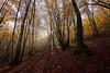Positive vibration II (Hector Prada) Tags: bosque otoño niebla luz sol hojas hayas hayedo mistico naturaleza belleza bucolico tranqulidad forest autumn fog mist light especial mystic nature tree nikon d610 1635 morning walking