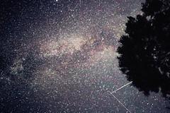 galaxy (Loore-Ly) Tags: milkyway galaxystars stars galaxy shine astronomy space sky night nightysky nightsky stella tree siluet shadow grow