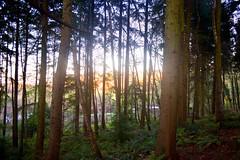 Trees (L Hughesy) Tags: light sun sunset