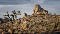 Joshua Tree National Park (FackFoto) Tags: mountain berg nationalpark desert joshuatree wste