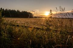 090820150604058.jpg (Flatroad) Tags: lund skne sverige sommar landskap revinge 1plats 2motiv 5rstid