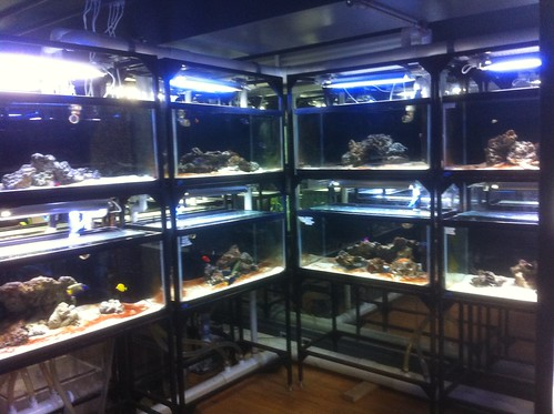 Custom Fish Systems - Fish Store - NYC - 6