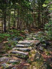 Granite Steps, Camden Hills State Park, Camden, Maine (43933) (John Bald) Tags: statepark forest camden maine trail granite civilianconservationcorps camdenhillsstatepark granitesteps