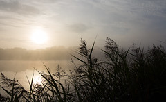 An Early Morning Walk... (Glenn Cartmill) Tags: park county uk morning ireland sky sun mist lake canon eos early lough unitedkingdom glenn country september northernireland armagh loughgall 2015 countyarmagh cartmill 650d coarmagh