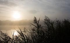 An Early Morning Walk... (Glenn Cartmill) Tags: park county uk morning ireland sky sun mist lake canon eos early lough unitedkingdom glenn country september northernireland armagh loughgall 2015 countyarmagh cartmill 650d coarmagh