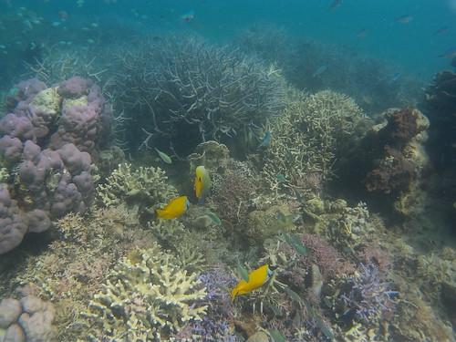 17 islands - Riung