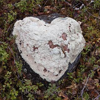 Tapion sydän - Tapio´s Heart