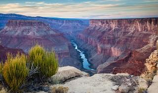 Grand Canyon rarity!
