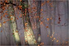 Autunno - faggi (Armando Domenico Ferrari) Tags: autumn italy mountain foglie photoshop lumix tag panasonic autunno montagna brescia malcesine lakegarda lagodigarda adf gardasee montebaldo cassone faggi coloridautunno istrice1 armandodomenicoferrari armandodomenicoferrariphotographer armandoferrarifotografo armandodomenicoferrarifotografo lumixpanasonictz20 cassoneeremosbenignoecaro eremosanbenignoecaro