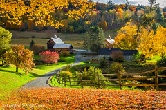 Morning on the Farm (Christina DeAngelo) Tags: road autumn trees mountains building fall grass leaves barn fence morninglight vermont shadows farm newengland structure hills foliage explore driveway valley winding hollow diamondclassphotographer flickrdiamond