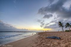 Poipu Beach Park (Kosen Ishikawa) Tags: sunset beach kauai poipu monkseal