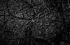 grey matter (Ralpheyesee) Tags: appletree dendrites