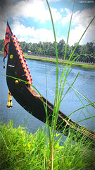 20150826_120254 (|| Nellickal Palliyodam ||) Tags: india race boat snake kerala pooja krishna aranmula avittam parthasarathy vallamkali parthan palliyodam malakkara nellickal kavadiyattom jalothsavam edanadu