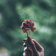 169/366 (abnormalbeauty.) Tags: squared flower dead green macro sad mononoaware japanese hand nails love pure