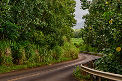 When driving is fun! (AgarwalArun) Tags: sonya7m2 sonyilce7m2 hawaii kauai island landscape scenic nature views clouds weather kappa lihue road trees