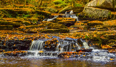 Fallen Leaves Cover Minnie Falls (Catskills Photography) Tags: odc warmcolors leaves fall autumn waterfall water stream longexposure canon50mmf18stm forest nature landscape