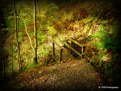 The Portal (Rollingstone1) Tags: autumn portal nature outdoor natural bridge trees forest leaves gully trail