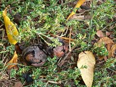 Tre Noci Al Giorno damgas1 (damgas86) Tags: noci noce proprietà virtù cura mallo arginina omega3 energetiche frutto secco ingredienti rcetta