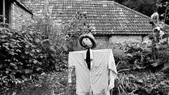 IMG_4631-28 (immieHawks) Tags: scarecrow garden veg fruit dyrham park national trust nature