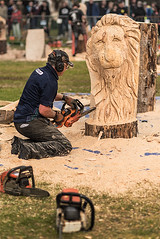 Not Quite Time to Roar (Geoff France) Tags: carving statue chainsaw chainsawcarving wood saw carver carrbridge highlands scottishhighlands cairngorms cairngormsnationalpark cartridgechainsawcarvingcompetition