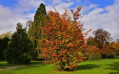 En habit de fte (Diegojack) Tags: automne couleurs paysages vaud arbres parc indpendance morges lumire