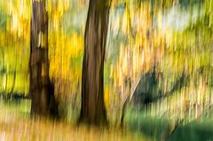 AUTOMNE A LA RIVIERE (zventure,) Tags: zventure automne aube auribeau eau fleuve fleuvecotier flou file arbres arbustes campagne rivière rivage feuilles couleurs