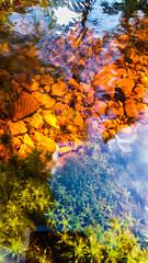 20160811_135803-1 (Andre56154) Tags: schweden sweden sverige wasser water bach flus river stream pflanze spiegelung reflection reflexion