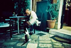 Cat swipe (Stephen Dowling) Tags: 35mm film cosinacx2 agfact100precisa corfu greece travel summer lomography xpro crossprocessed