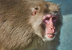 Monkey (Joao Eduardo Figueiredo) Tags: monkey zoo jardim zoológico lisboa lisbonne lisbon portugal wild animals animais selvagens gardens bear bears urso ursos nikon d3x lissabon joão capital joao eduardo figueiredo joaoeduardofigueiredo monkeys