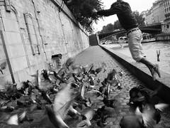 Paris (Fueguino de hace poco) Tags: blanco y negro monocromo monocromatico rio sena paris puente paloma ave salto movimiento momento adoquin antiguo historia