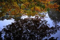 Autumn reflection (beimpressed) Tags: autumn herbst reflection water october oktober wasser spiegelung rain regen see color colourfull