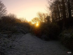A Frosty Morning at Sunrise in Wales (caren (Thanks for 1 Million+ views)) Tags: frost sunrise winterwonderland goldencolour mystic westwales wales uk cymru sonnenaufgang landscape natural landschaft codiadhaul ceredigion
