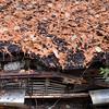 DSC_0239 v2 v2 (collations) Tags: ontario mcleansautowreckers autowreckers wreckers automobiles autos abandoned rockwood derelict junkyards autograveyards carcemeteries