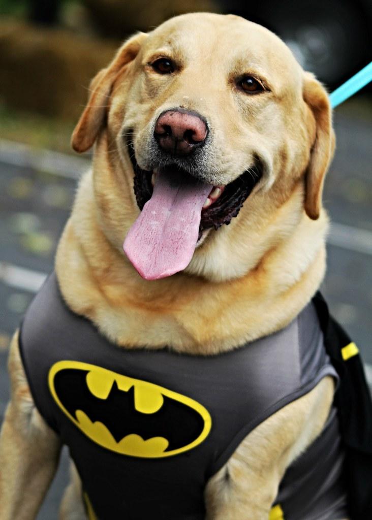 Dog Day Care Belvidere Il