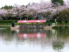 Daikaku-ji V (Douguerreotype) Tags: shrine temple buddhist kyoto japan people cherryblossom blossom lake boat cherry sakura reflection