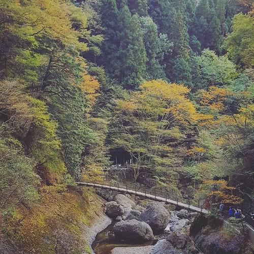 ครั้งแรกของการมาเที่ยว Ibaraki ชอบมากเลย ยังมีความสวยแบบชนบทอยู่มากมายในจังหวัดนี้ ♡
