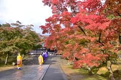 Ninnaji temple in autumn #2 (snowshoe hare*(catching up)) Tags: dsc0638 fall autumn mapleleaves japanesemaple temple ninnajitemple monk buddhistmonk