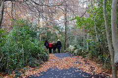 Week 47/52-The 2016 Edition - Vanishing Point -DSC_0328 (John Hickey - fotosbyjohnh) Tags: 2016 november2016 marlaypark dublin ireland publicpark publicamenity publicplace outdoor nature path pathway autumn 52weeksthe2016edition 52weekproject week472016 weekstartingfridaynovember182016