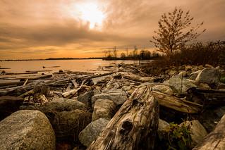 Driftwood Pit