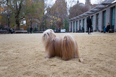 washington square park dog run (Charley Lhasa) Tags: ricohgrii grii 183mm 28mm35mmequivalent iso400 secatf28 0ev aperturepriority pattern noflash r010541 dng uncropped taken161124142118 uploaded161125010128 4stars flagged adobelightroomcc20157 lightroomcc20157 adobelightroom lightroom charley charleylhasa lhasaapso dog dogs washingtonsquareparkdogrun dogrun bigdogrun washingtonsquarepark wsp nycparks citypark urbanpark greenwichvillage manhattan newyorkcity nyc newyork ny tumblr161124 httpstmblrcozpjiby2f5fyaf