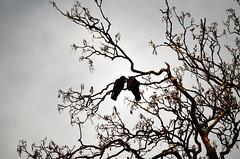 Schlossgarten Mnster Nov. 2016_59 (dcs 0104) Tags: schloss johann conrad schlaun westflischewilhelmsuniversitt universitt mnster nikon d3100 d800 nikkor 50 50mm 18 g 55300 55300mm 3556 vr flora baum strauch blatt arbre arbuste heester bush busch feuille leaf himmel sky ciel hemel botanischergarten garten garden jardin tuin herfst herbst autumn automne deutschland westfalen westfalia duitsland allemagne germany