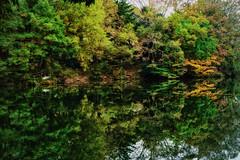 (Mori.Kei) Tags:   autumnleaves  reflection  green water    lake