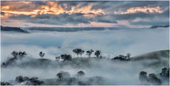The Life of the Fog (BlueberryAsh) Tags: fog strathcreek weather hills landscape outdoor sunrise stormscloudssunsetsunrise clouds nikond600 melbourne
